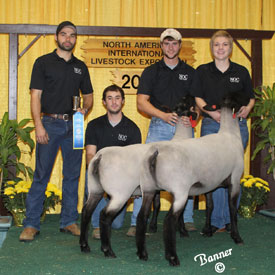 FIRST PLACE PAIR OF SUFFOLK YEARLING EWES